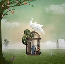 Birds' House
