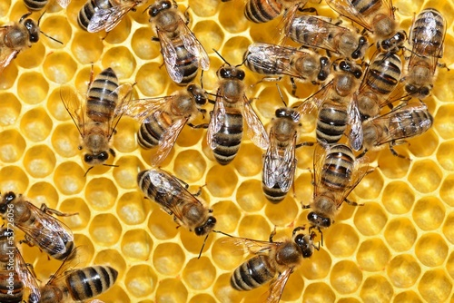 Fotografía  Petek ve arılar