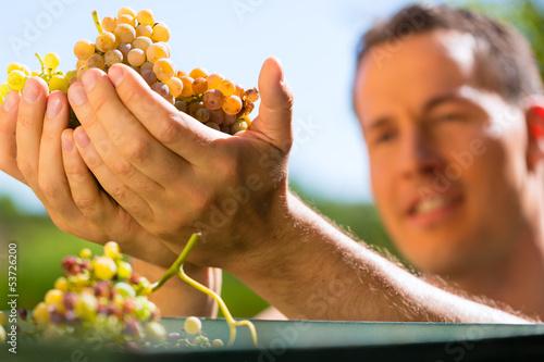 Fotografía  Winzer arbeiten mit Weinpresse