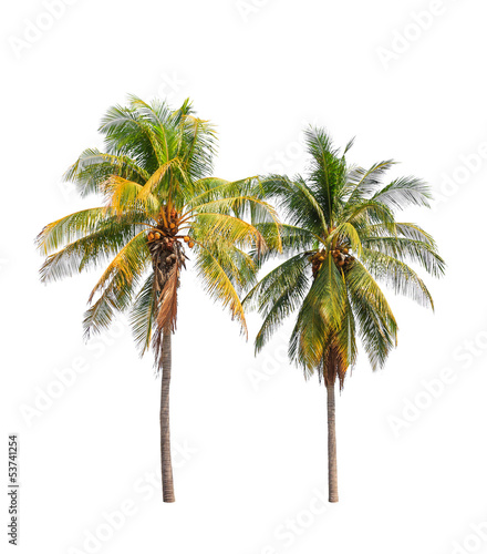 Aluminium Prints Palm tree Two coconut palm trees isolated on white background