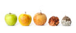 canvas print picture - Five apples in various states of decay