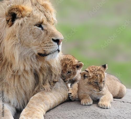 Staande foto Leeuw lions