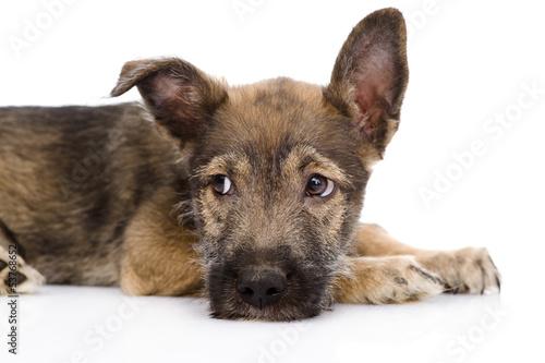 Foto  Traurig Mischlingshund. isoliert auf weißem Hintergrund