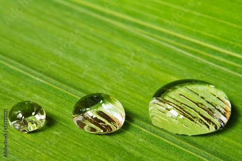 three droplets on leaf background