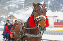 Traditional Horse Carriage