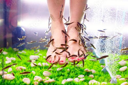 Poster Pedicure fish pedicure spa treatment, rufa garra fish