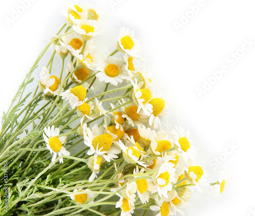 In de dag Bloemen Many chamomile isolated on white