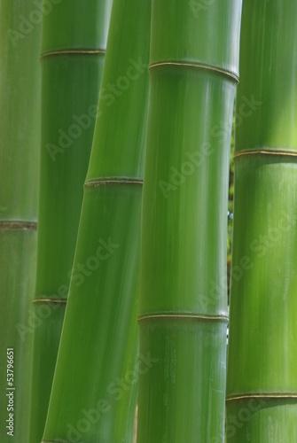Naklejka premium Zielony bambus