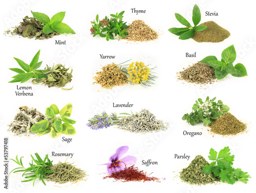 Fototapeta Collection of fresh and dry aromatic herbs obraz