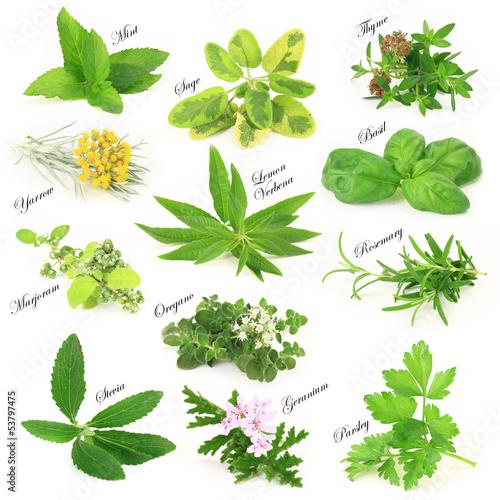 kolekcja-swiezych-aromatycznych-ziol
