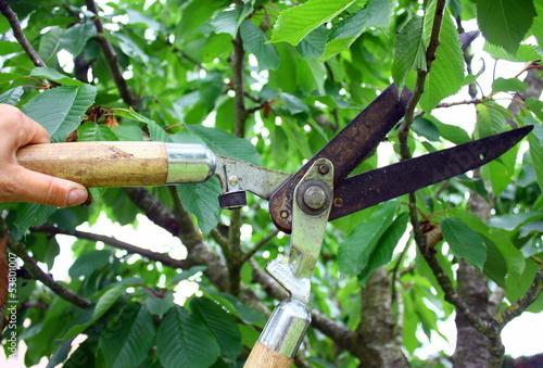 Fotografía  tailler les branches d'arbre avec un taille sécateur