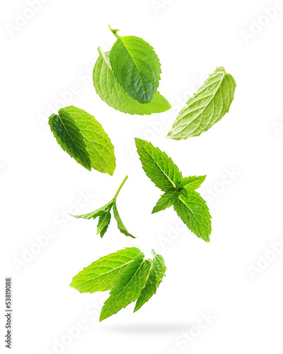 Obraz Green mint leaves isolated on a white background. - fototapety do salonu
