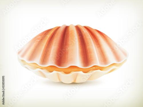 Fényképezés Seashell
