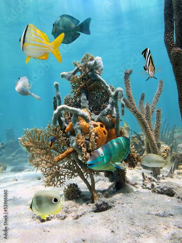 fototapeta na drzwi i meble W ramach morskiego życia wody