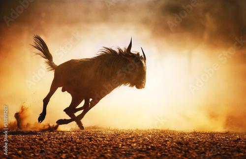 Nowoczesny obraz na płótnie Blue wildebeest running in dust
