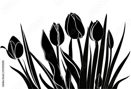Poster Floral black and white tulips flowers it is isolated