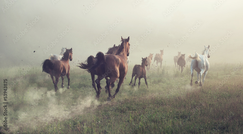 Fototapety, obrazy: Group of horses on the meadow