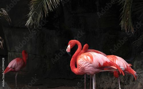 Garden Poster Flamingo Flamingoes