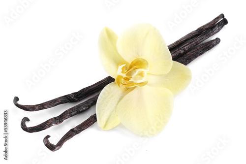 Fotografía  Vanilla sticks with a flower.