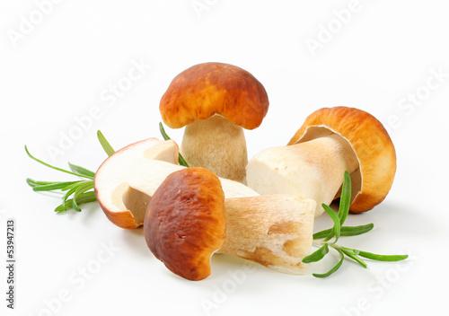 Fototapeta Fresh edible mushroom obraz