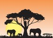 Elephants's silhouettes and the nature landscape