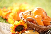 Pumpkins In Basket And Decorat...