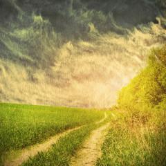 Fototapeta Wiejski green field and blue sky