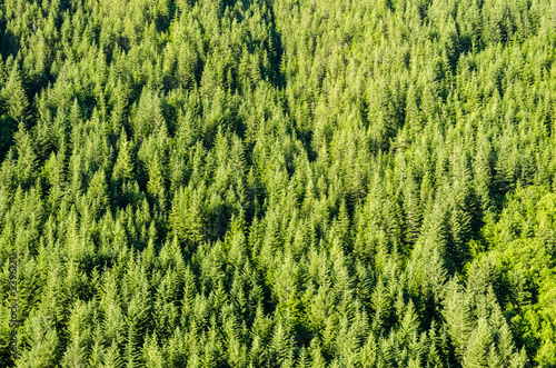 Wall Murals Forest Lush Green Trees