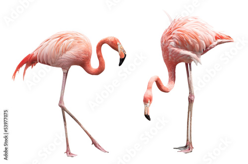 Deurstickers Flamingo Two flamingo