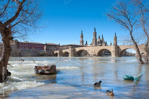 Patos en el Ebro inundado a su paso por Zaragoza
