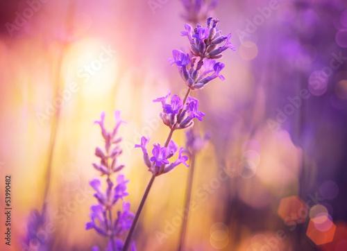 kwiaty-streszczenie-kwiatowy-fioletowy-design-nieostrosc