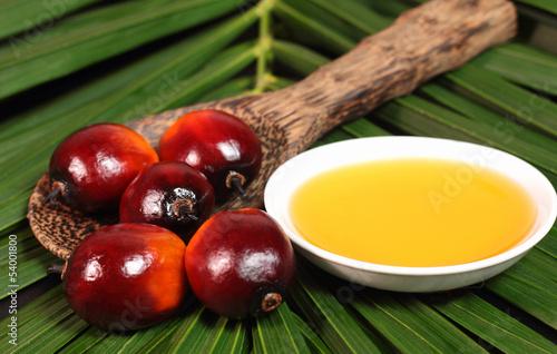 Fototapeta Oil palm fruit and cooking oil obraz