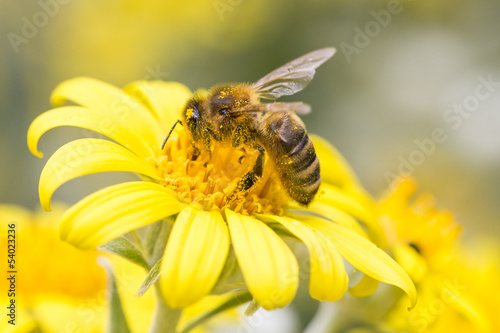 Papiers peints Bee Bee on a flower