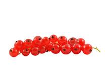 Czerwona Porzeczka  Na Białym Tle