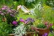 canvas print picture - Gartenidylle mit Leiterwagen