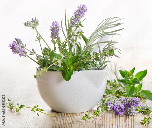 Fototapeta premium Świeże zioła