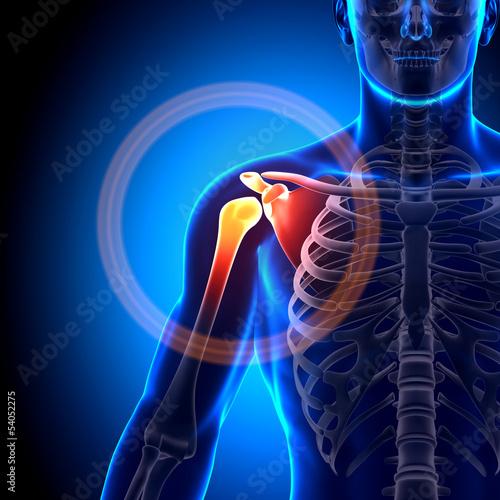 Canvas Print Shoulder / Scapula / Clavicle - Anatomy Bones