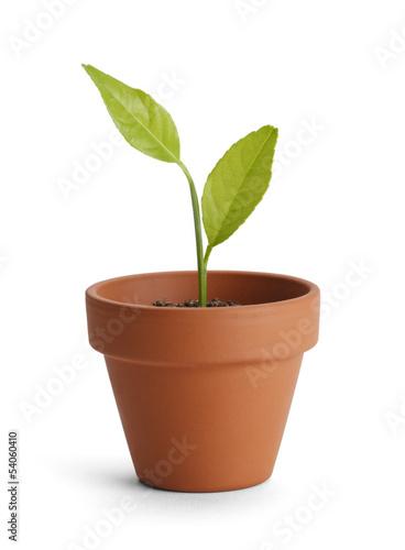 Fototapeta Potted Plant