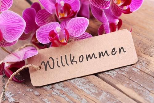 Recess Fitting Orchid Willkommen!