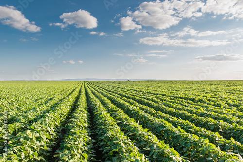 Canvas Prints Culture Soybean Field