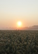 success of the agricultural economy - rich harvest - sunrise