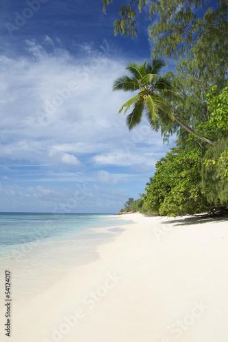 Spoed Foto op Canvas Caraïben Paradise Beach Seychelles Indian Ocean Palm Tree