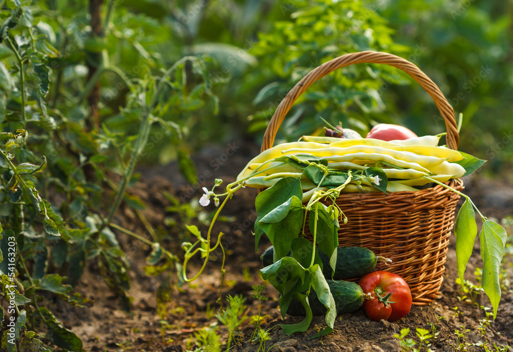 Fototapety, obrazy: A harvest of season vegetables in a wicker basket