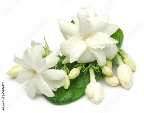 Fotografie, Obraz  Jasmine flower with leaves