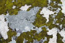 Moss On Rock Background Texture