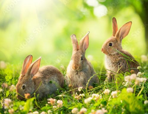 Foto-Flächenvorhang ohne Schienensystem - Rabbits. Art Design of Cute Little Easter Bunnies in the Meadow. (von Subbotina Anna)