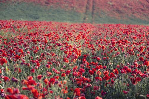 Spoed Foto op Canvas Khaki Stunning poppy field landscap