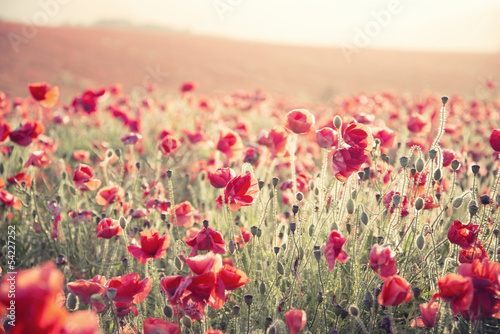 Poster Poppy Stunning poppy field landscape under Summer sunset sky with cros
