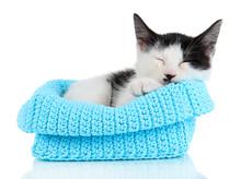 Small Kitten In Blue Knitting Basket Isolated On White