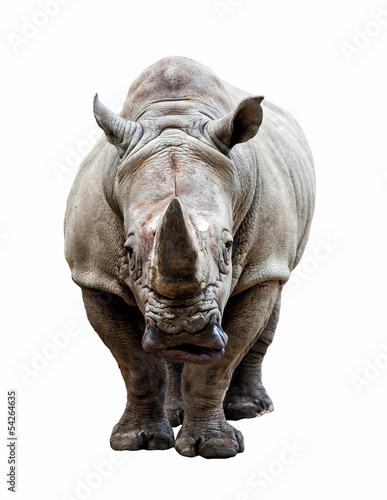 Foto op Aluminium Neushoorn rhino on white background